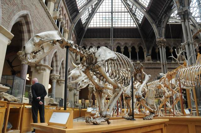 oxford university museum of natural history - photo lucian muntean _0012