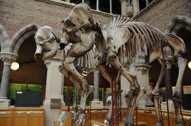 oxford university museum of natural history - photo lucian muntean _0014
