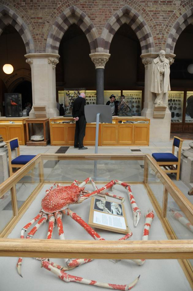 oxford university museum of natural history - photo lucian muntean _0015