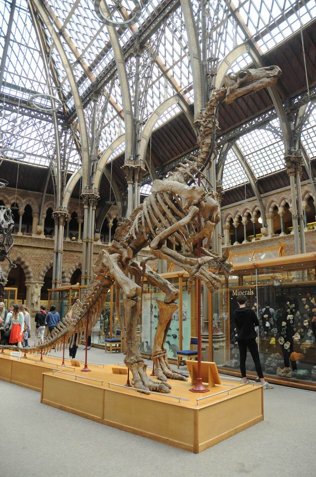 oxford university museum of natural history - photo lucian muntean _0016