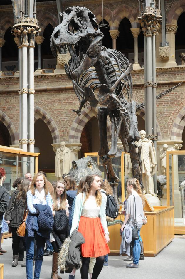 oxford university museum of natural history - photo lucian muntean _0017