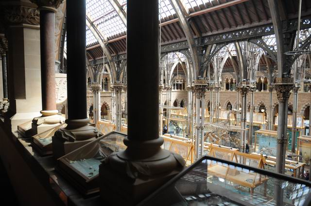 oxford university museum of natural history - photo lucian muntean _0019
