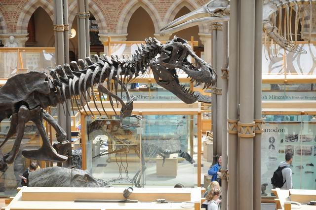 oxford university museum of natural history - photo lucian muntean _0020