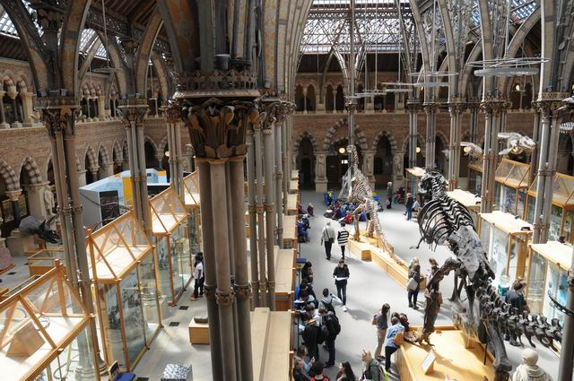 oxford university museum of natural history - photo lucian muntean _0022