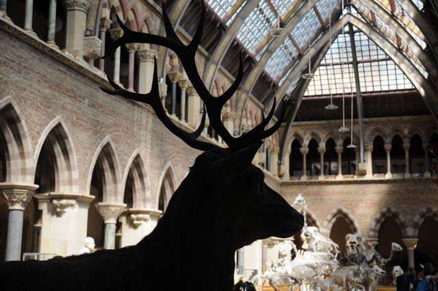 oxford university museum of natural history - photo lucian muntean _0025