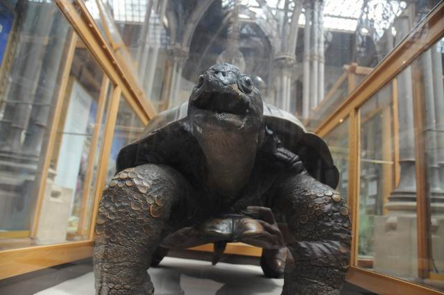oxford university museum of natural history - photo lucian muntean _0029