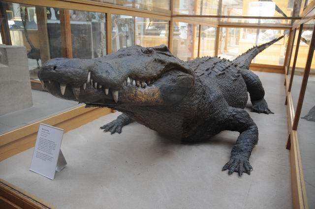 oxford university museum of natural history - photo lucian muntean _0030