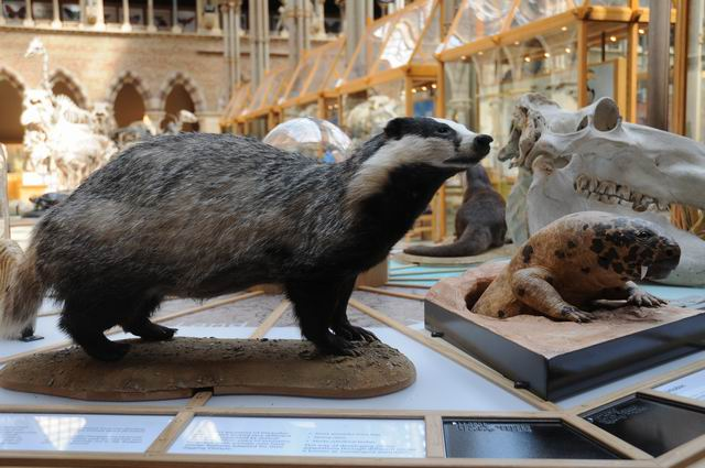 oxford university museum of natural history - photo lucian muntean _0031