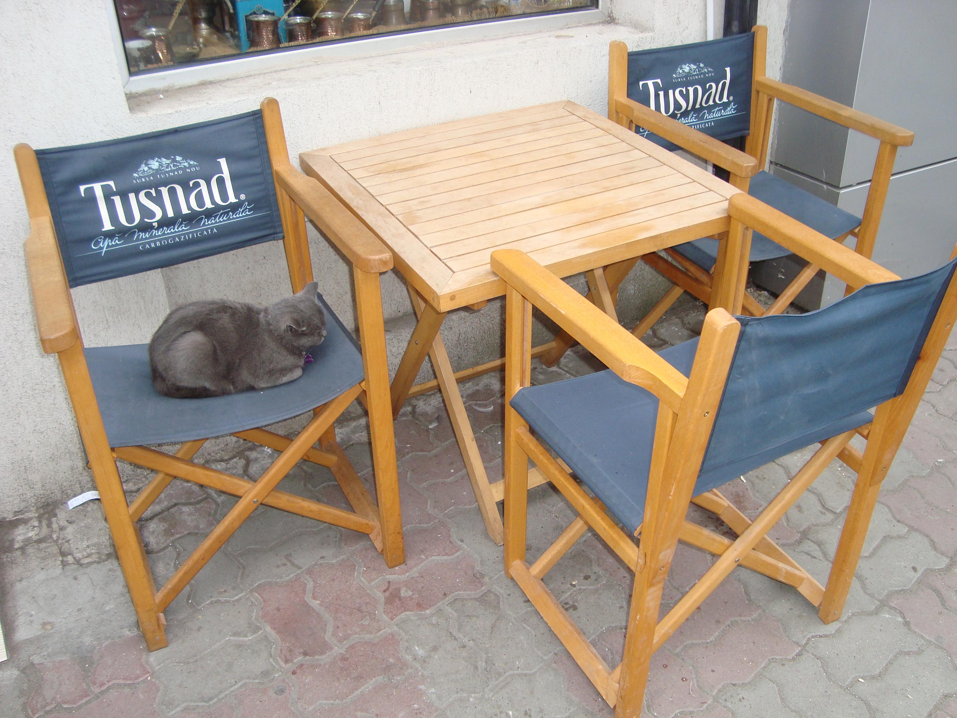 4 O pisica indiferenta la turisti