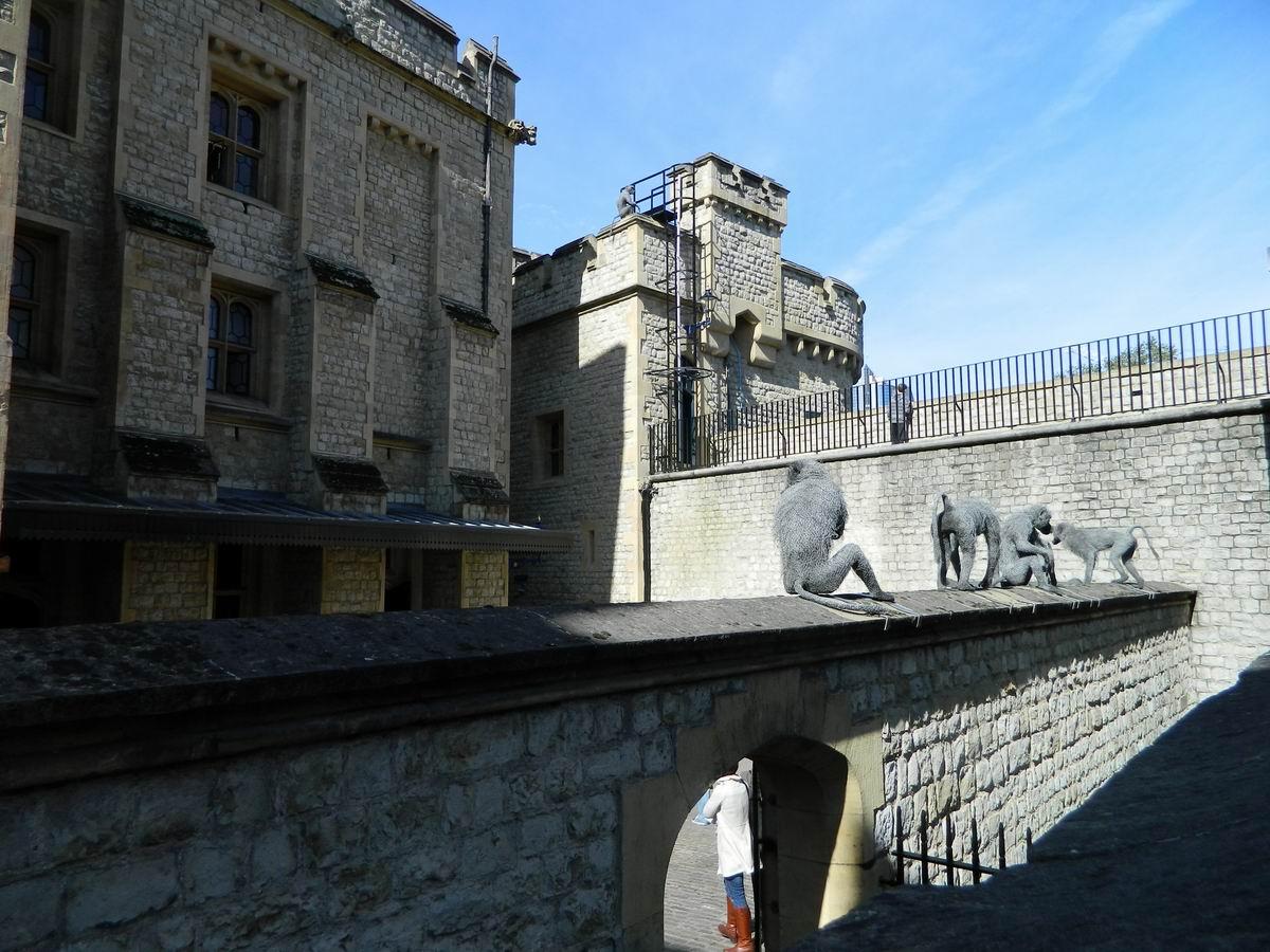 Resize of 13 Candva in Turnul Londrei era si o gradina zoologica pentru placerea si orgaliul suveranilor