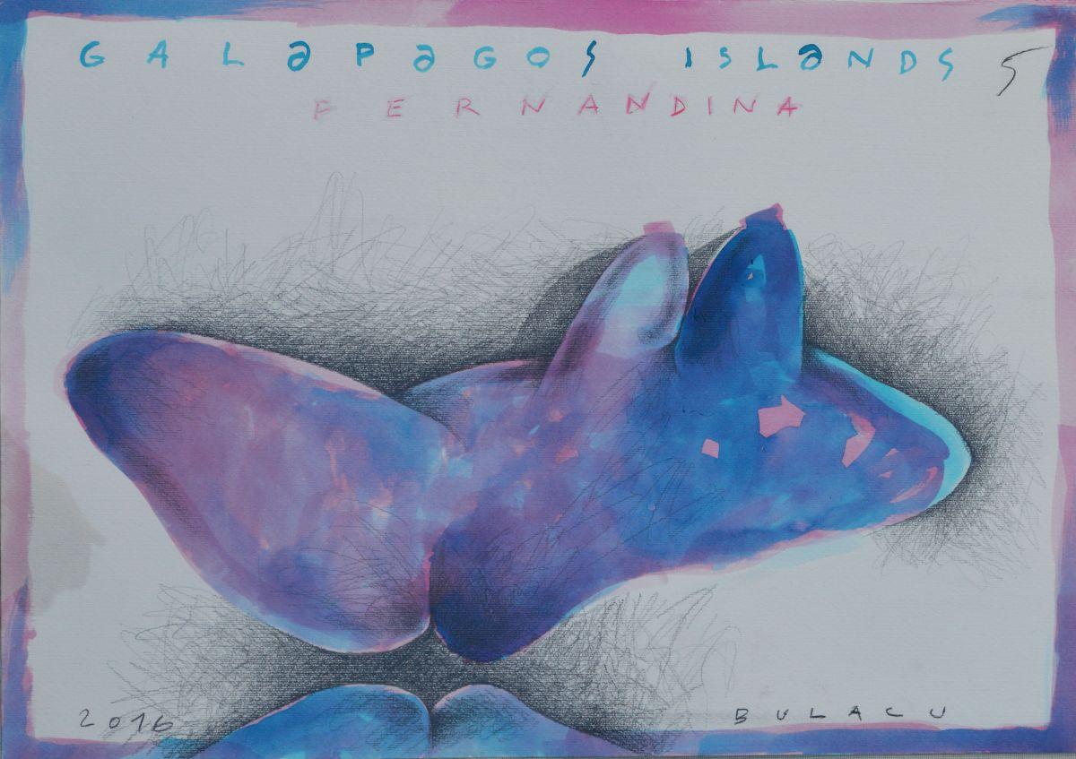 Bulacu_aure_Galapagos_islands_fernandina